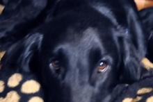 Czy psa należy karać? #1
